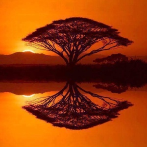 Tree of Life - As Above, So Below