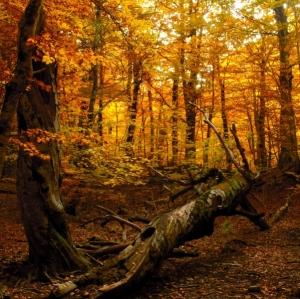tree-fallen-autumn-woods
